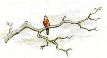 bird-images-12