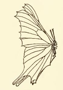 butterfly-10