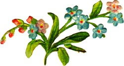 forget-me-nots-3