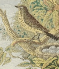 bird-nests-16