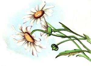 flower-clipart-5
