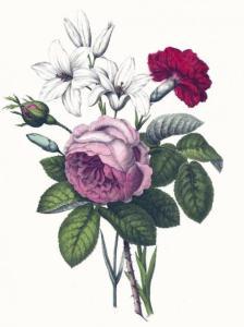 rose-lily-carnation-yonge