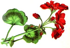 flower-clipart-1