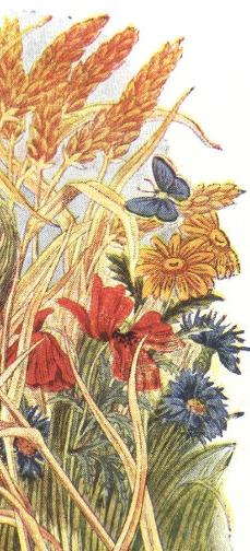 flowers-straw-butterfly