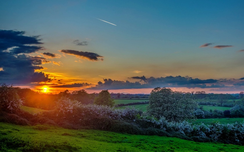pasture_sunset