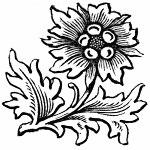 bw-flowers-41